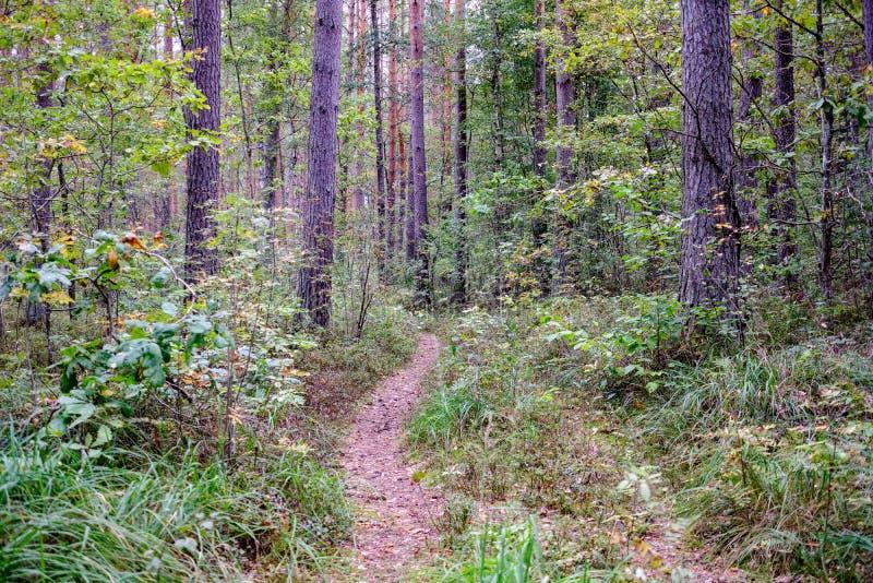 Journal de hausse dans les bois photos libres de droits