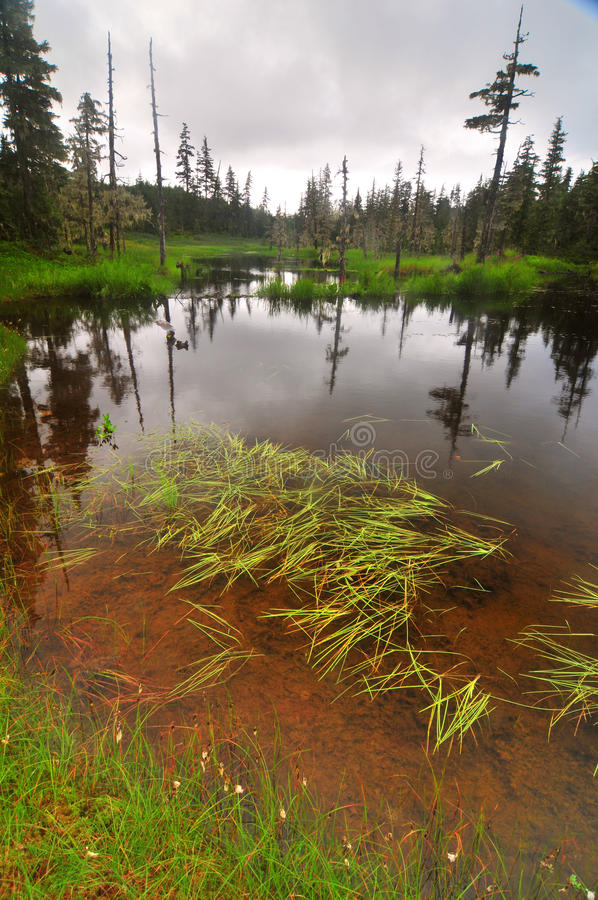 Journal de lac Elsner image stock