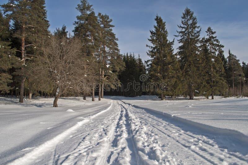 Journal de Snowmobile dans la forêt de l'hiver images stock