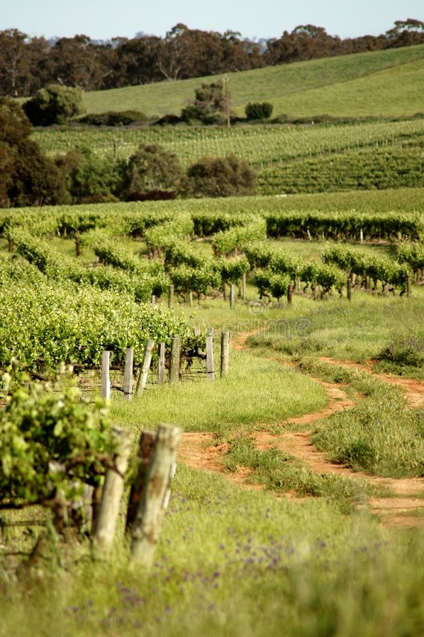 Journal de vin photo stock