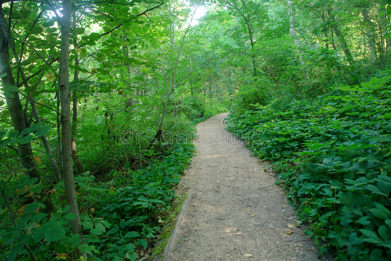 Journal par la forêt photos stock