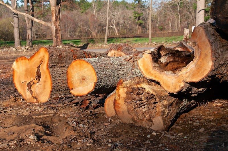 Journaler av enormt sörjer trädet royaltyfria foton
