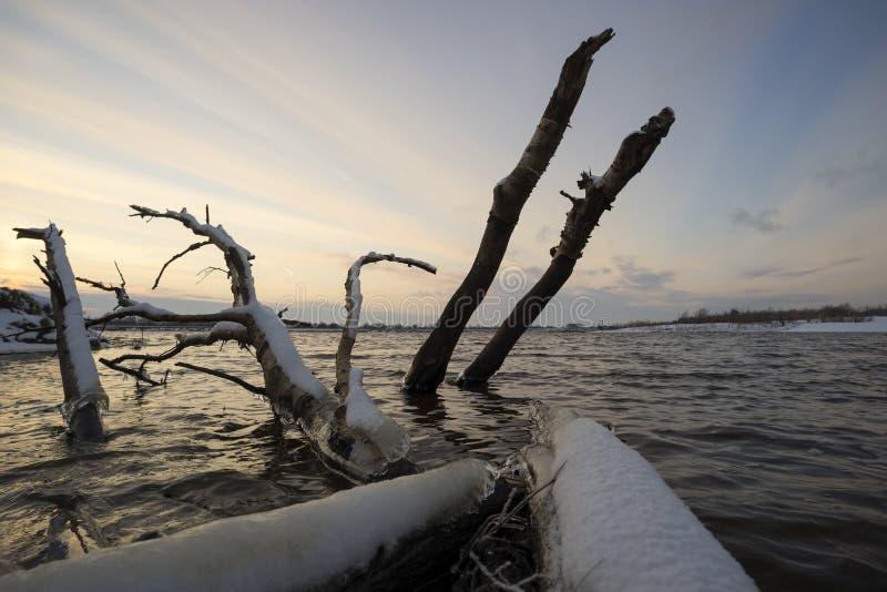 Journaler som klibbar ut ur vattnet på solnedgången royaltyfri foto