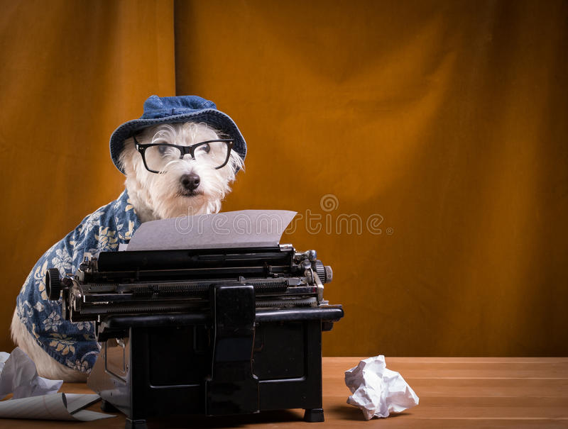 Download Journalist Dog Stock Photo - Image: 27338160