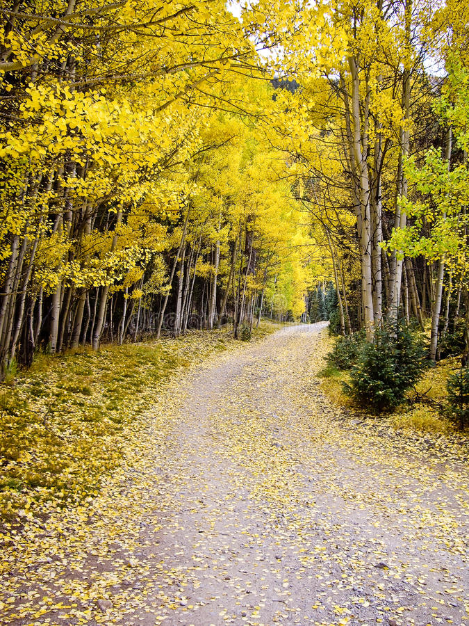 Download Journey Through The Aspens In Fall Colorado USA Stock Image - Image: 26304673