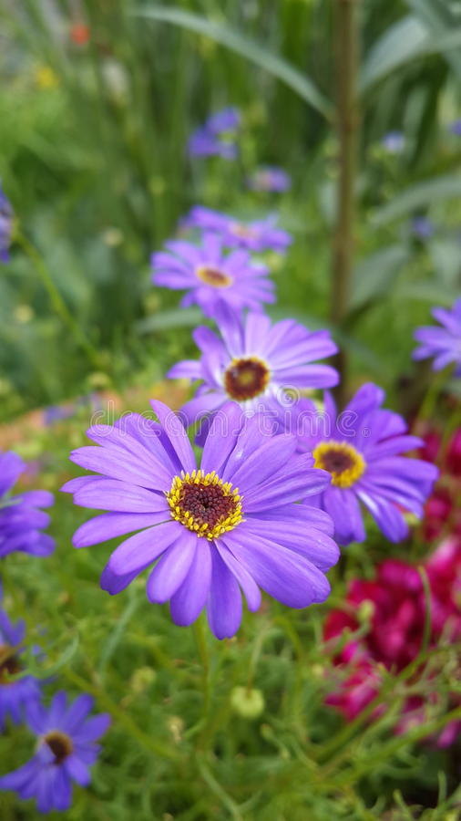 Journey of purple flowers. stock images