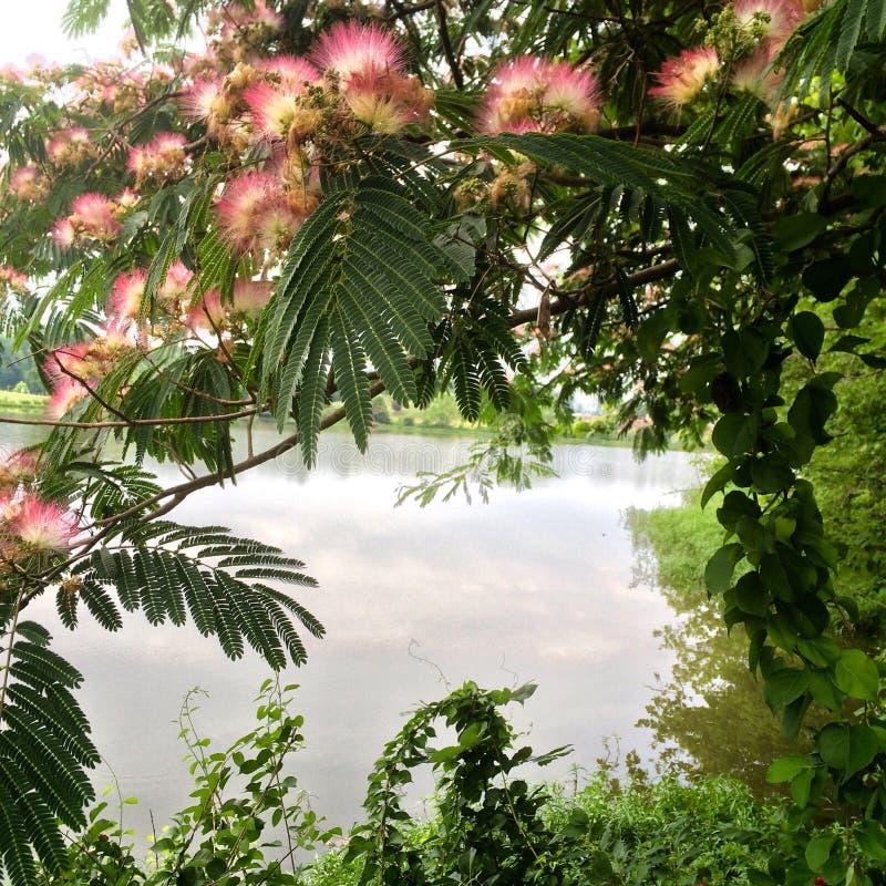 Jours de lac image libre de droits