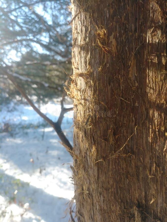 Jours ensoleillés de neige apaiser l'âme photos libres de droits
