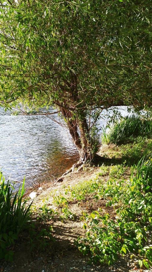 Jours ensoleillés par la rivière photo libre de droits
