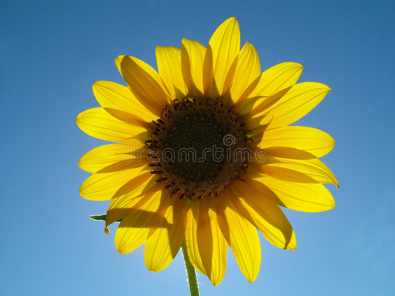 Download Jours heureux photo stock. Image du centrale, jaune, ciel - 64012
