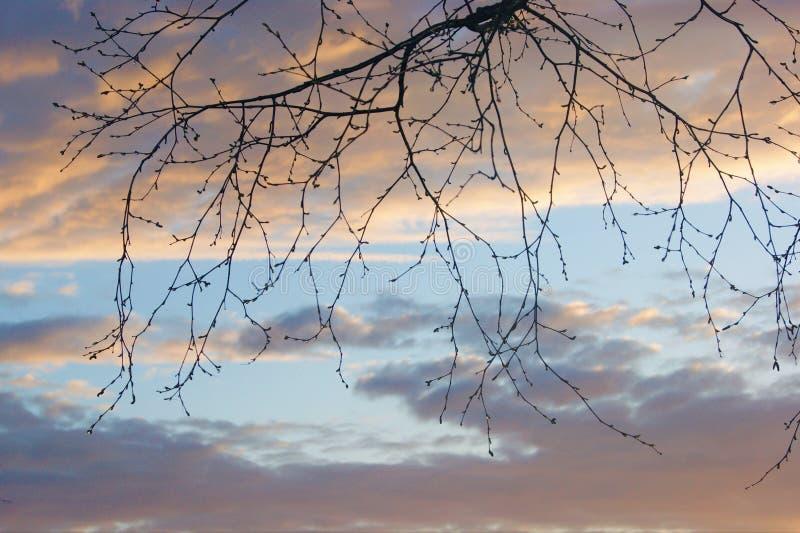 Jours ouvrables provinciaux de ressort - branches d'arbre nues contre un ciel nuageux image stock