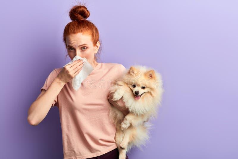 Jovem mulher agradável na roupa ocasional sylish que fecha seu nariz com toalha de papel imagens de stock