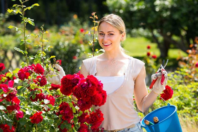 Jovem mulher alegre que trabalha com as rosas do arbusto com hortícola demasiado fotografia de stock