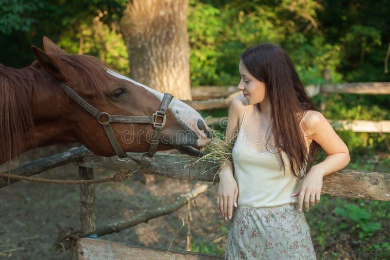 A jovem mulher alimenta o cavalo fotos de stock
