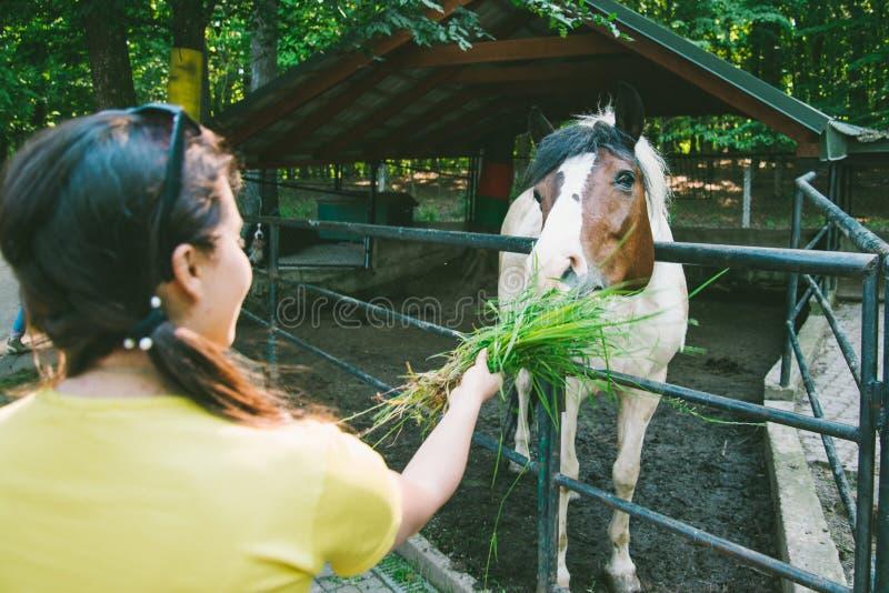 A jovem mulher alimenta o cavalo na exploração agrícola imagens de stock