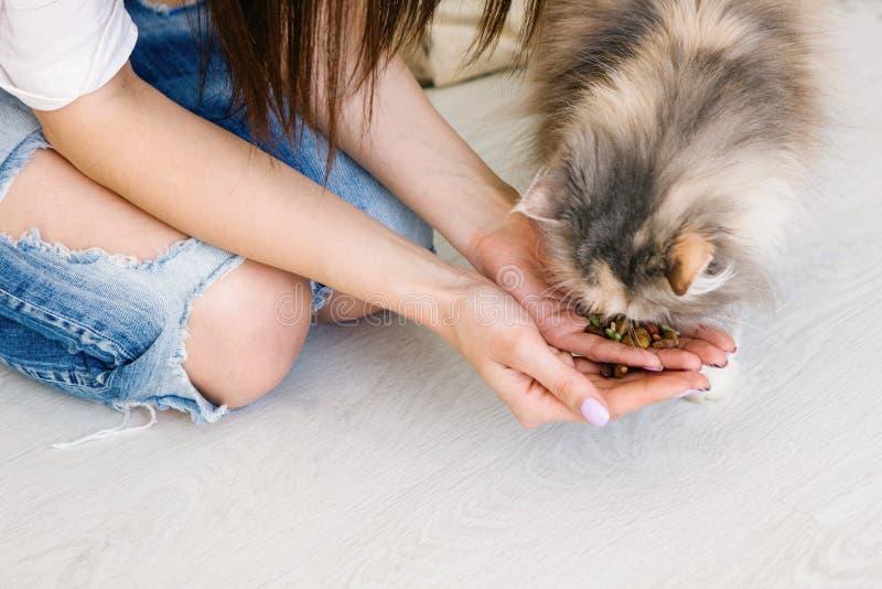 A jovem mulher alimenta seu gato das mãos fotos de stock royalty free