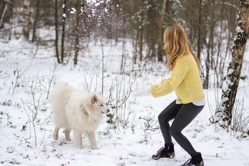 Jovem mulher bonita no inverno nevado Forest Park Walking Playing com seu Samoyed branco do cão fotos de stock royalty free