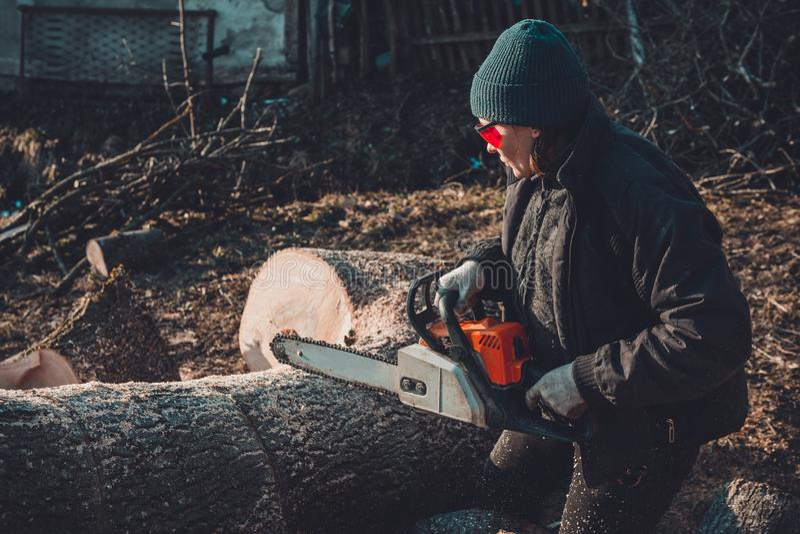 A jovem mulher bonita nos vidros corta uma grande ?rvore da cinza na madeira para o inverno imagem de stock