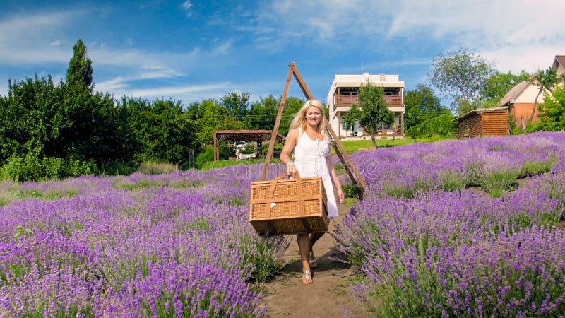Jovem mulher bonita que anda no campo da alfazema com a cesta de vime grande para o piquenique fotografia de stock
