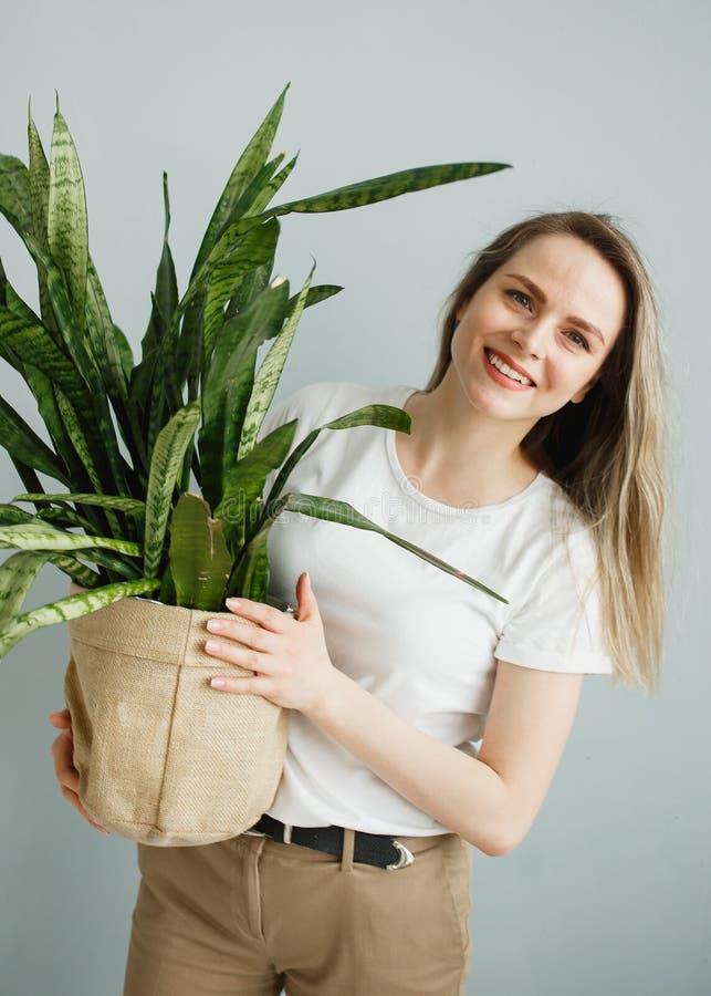Jovem mulher bonita que guarda o Sansevieria em pasta da planta e que sorri na câmera isolada em cinzento fotos de stock royalty free