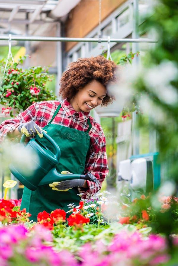 Jovem mulher bonita que molha vários houseplants em pasta fotos de stock