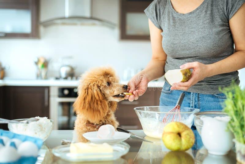 A jovem mulher com seu cão está cozinhando na cozinha foto de stock