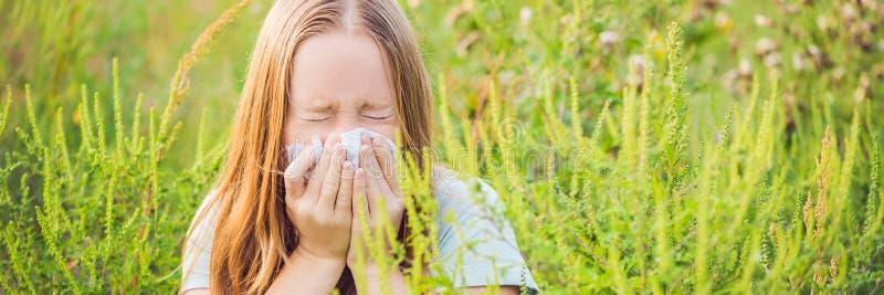 A jovem mulher espirra devido a uma alergia à BANDEIRA do ragweed, formato longo imagens de stock