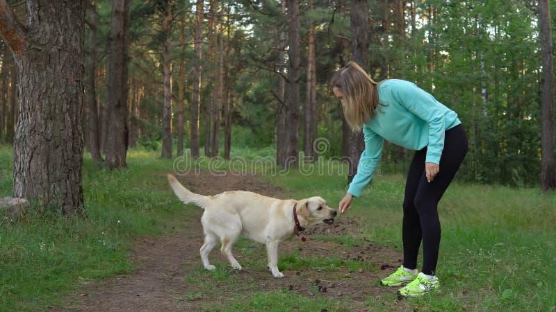 A jovem mulher está andando com o cão na floresta foto de stock royalty free