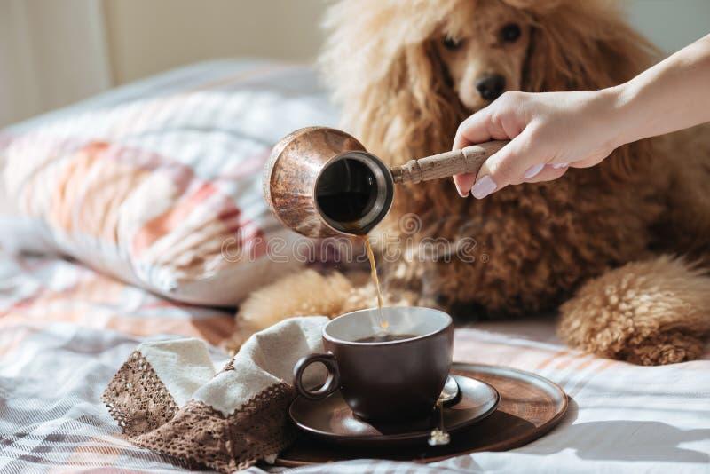A jovem mulher está descansando com um cão na cama em casa e café de derramamento em um copo imagens de stock