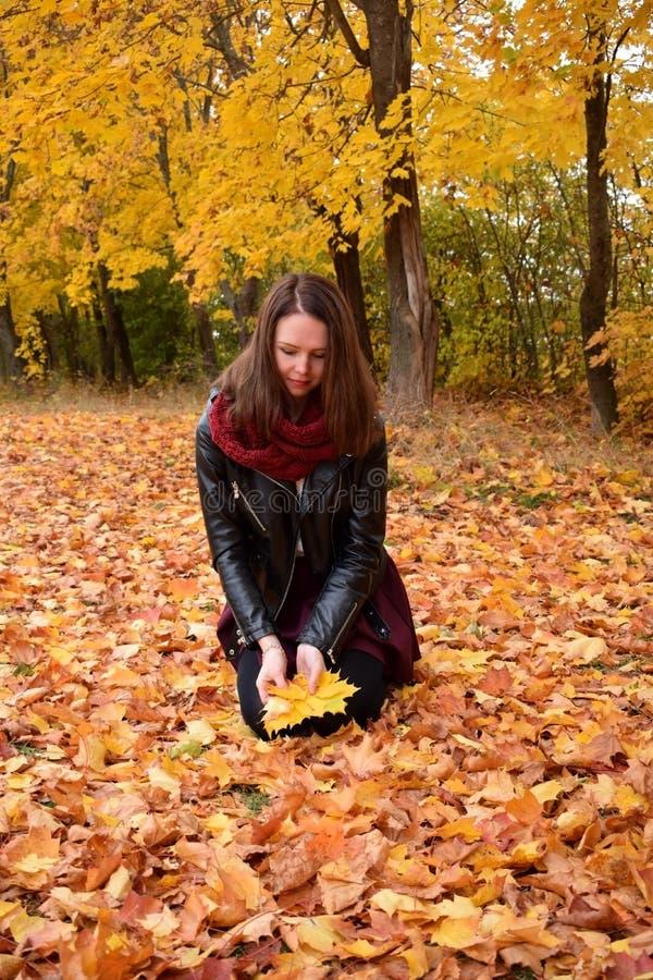 A jovem mulher está pegarando as folhas amarelas fotografia de stock