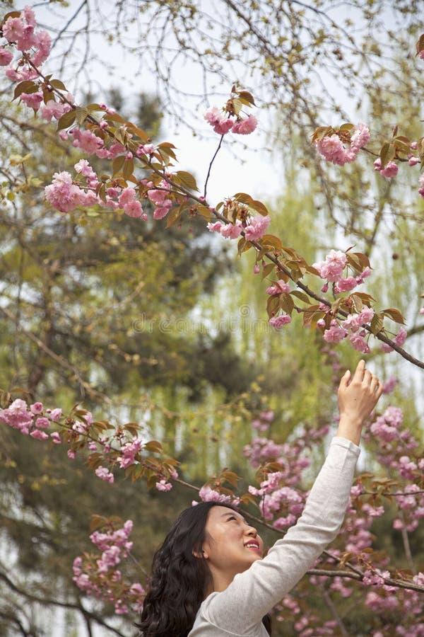 Jovem mulher feliz que alcança até o toque uma flor da flor fora no parque na primavera imagem de stock