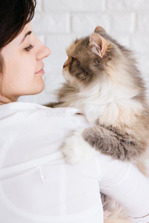 A jovem mulher guarda seu gato macio nas mãos imagens de stock