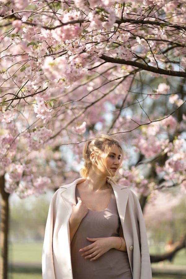 Jovem mulher loura bonita no parque de Sakura Cherry Blossom na mola que aprecia a natureza e o tempo livre durante ela que viaja imagens de stock royalty free