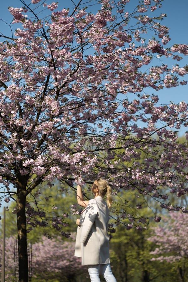 Jovem mulher loura bonita no parque de Sakura Cherry Blossom na mola que aprecia a natureza e o tempo livre durante ela que viaja fotos de stock