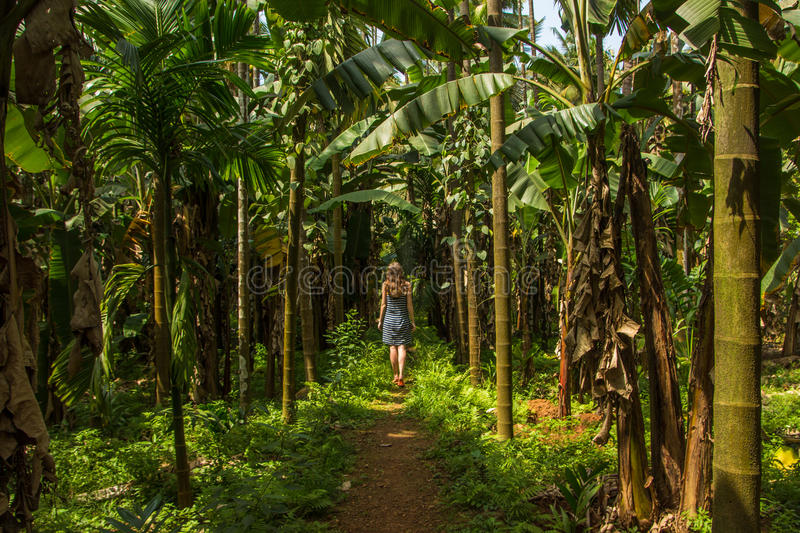 Jovem mulher na selva na plantação tropical da especiaria, Goa, Ind fotos de stock