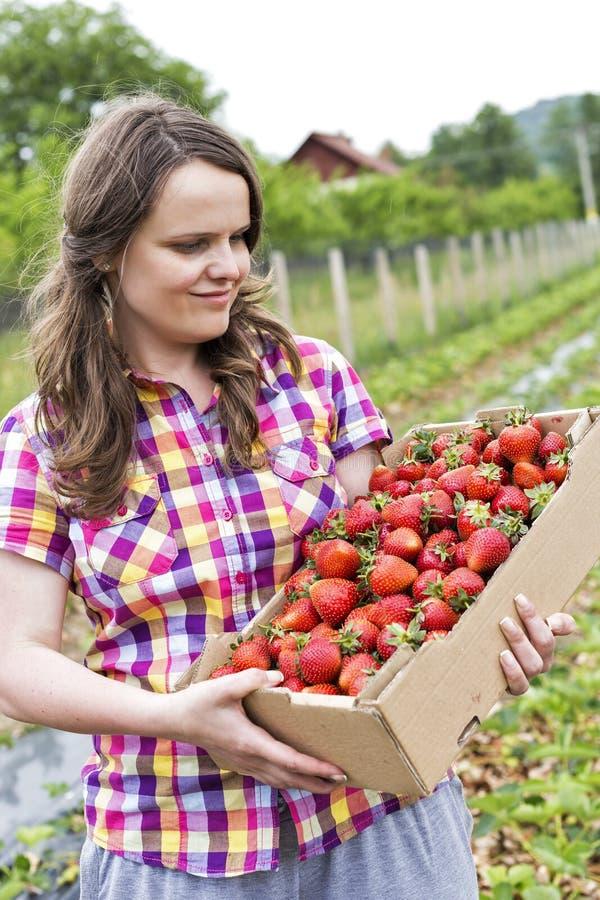Jovem mulher no campo da morango que guarda uma sagacidade completa da caixa de cartão fotografia de stock royalty free