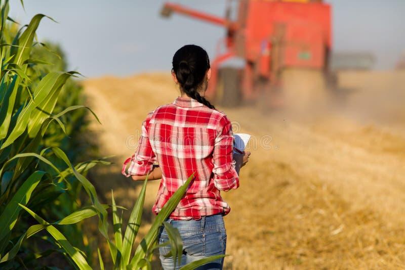 Jovem mulher no campo de trigo durante a colheita imagem de stock royalty free