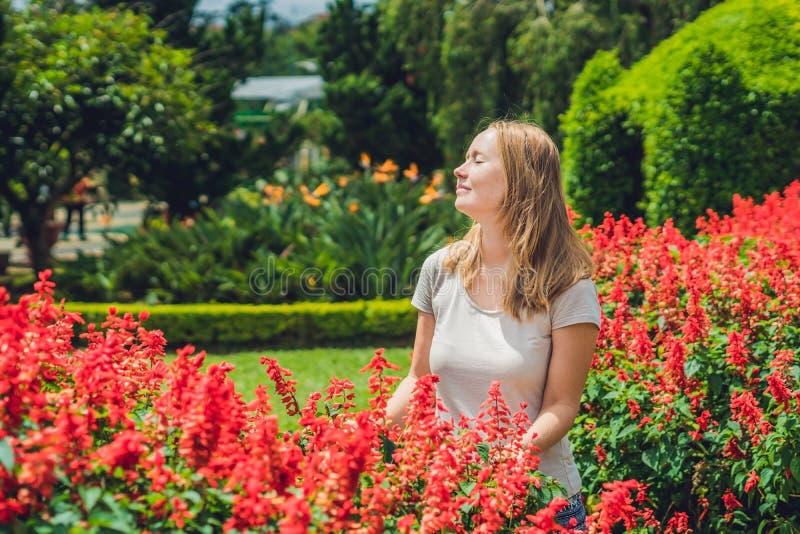 A jovem mulher no fundo de splendens vermelhos do salvia floresce o bl fotos de stock