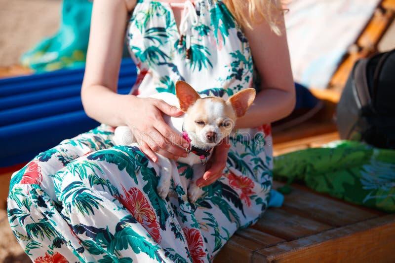 Jovem mulher no vestido do verão com o cão bonito pequeno em suas mãos fotografia de stock royalty free