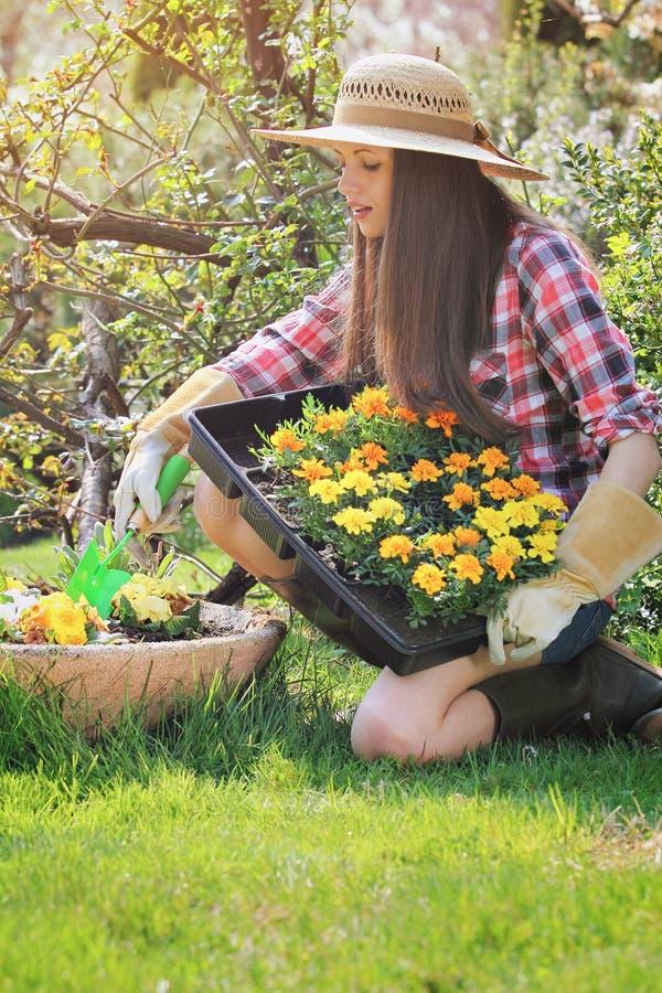 A jovem mulher planta flores em um vaso do jardim imagem de stock royalty free
