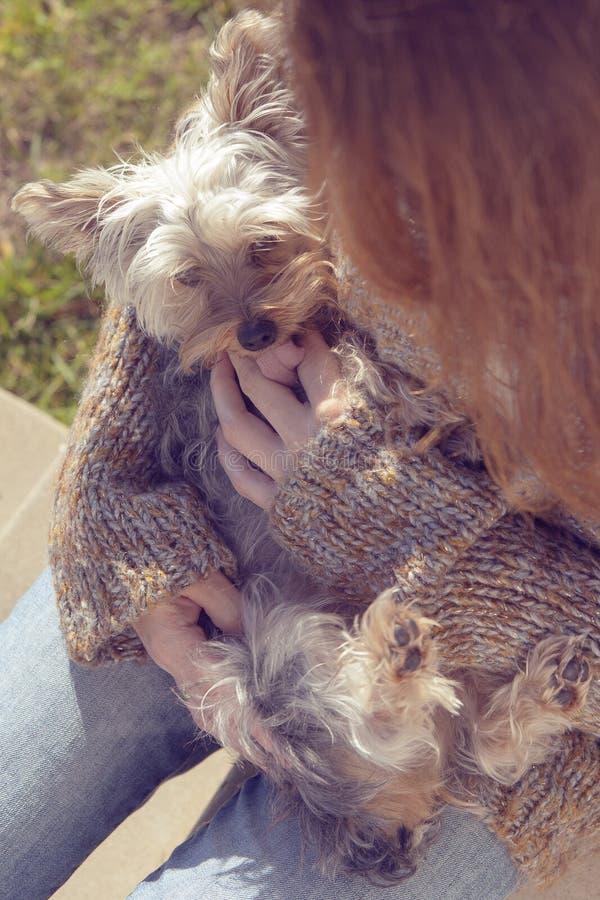 Jovem mulher que abraça e que afaga seu cão de cachorrinho do yorkshire terrier em seu regaço fotos de stock