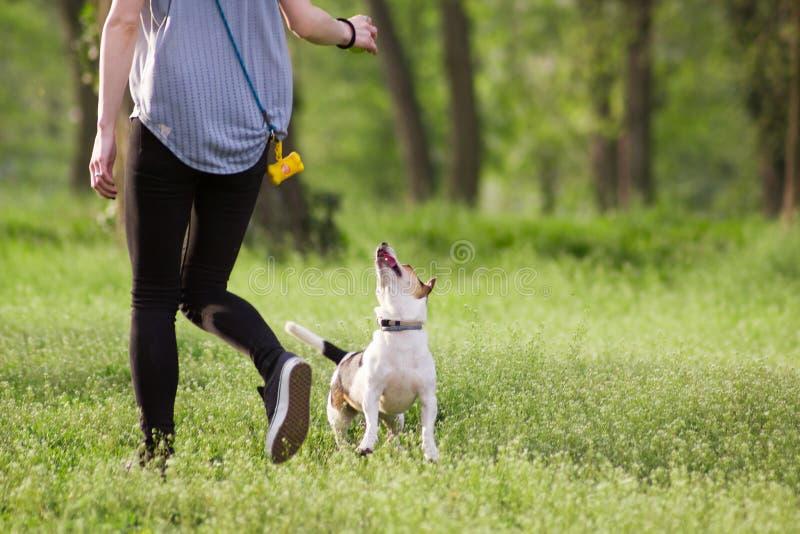 Jovem mulher que anda com um cão que joga o treinamento fotos de stock royalty free