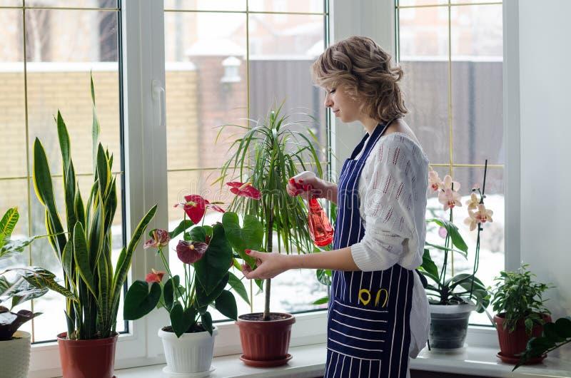 Jovem mulher que cultiva as plantas home fotografia de stock royalty free