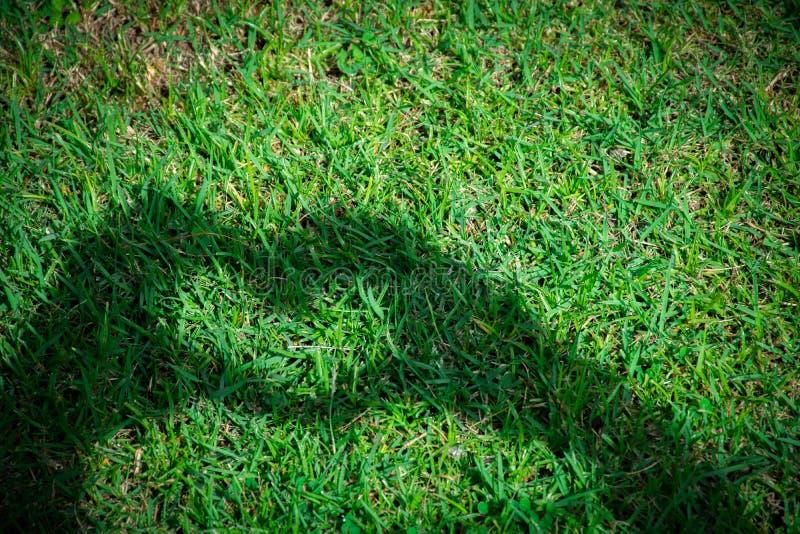 A jovem mulher que faz o símbolo da sombra do coração do amor cede perto a grama imagens de stock royalty free