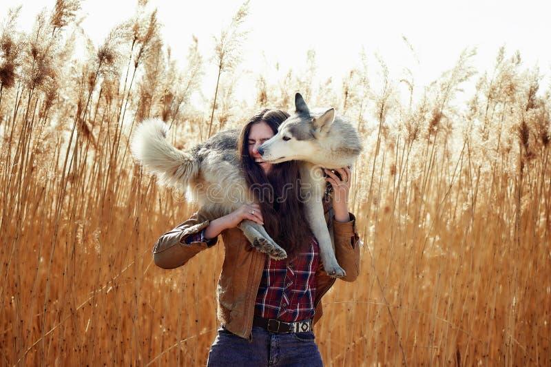 Jovem mulher que joga com seu cachorrinho do cão de puxar trenós Siberian em um campo durante o por do sol fotos de stock royalty free