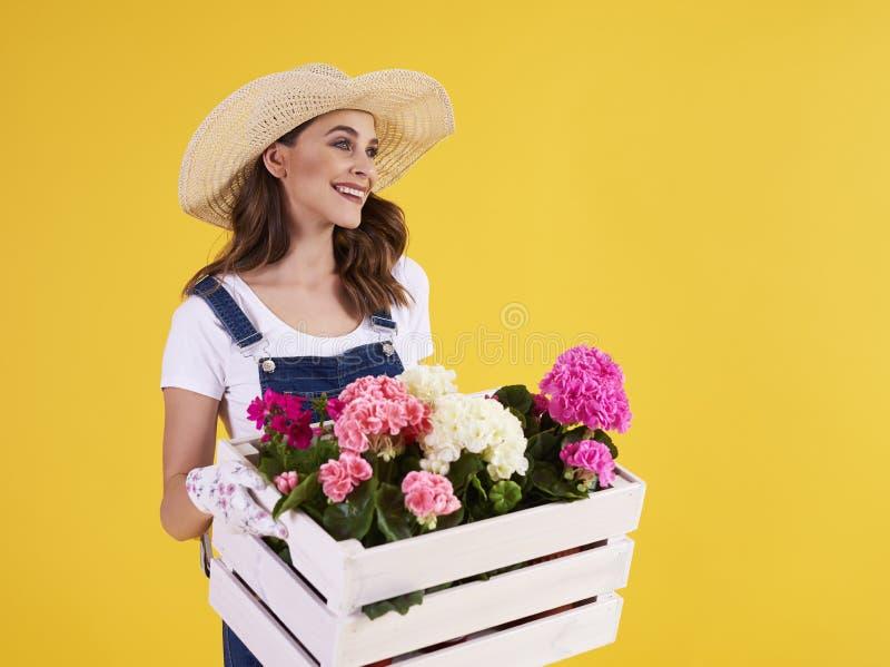 Jovem mulher que leva a caixa de madeira com flores bonitas imagem de stock