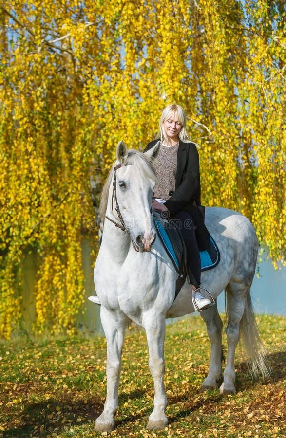 Jovem mulher que monta um cavalo em um dia ensolarado do outono na perspectiva do outono dourado foto de stock