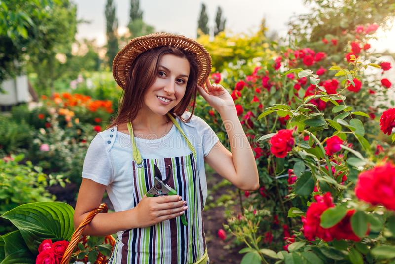 Jovem mulher que recolhe flores no jardim Tesoura de podar manual da terra arrendada da menina para cortar rosas fora Conceito de imagem de stock royalty free