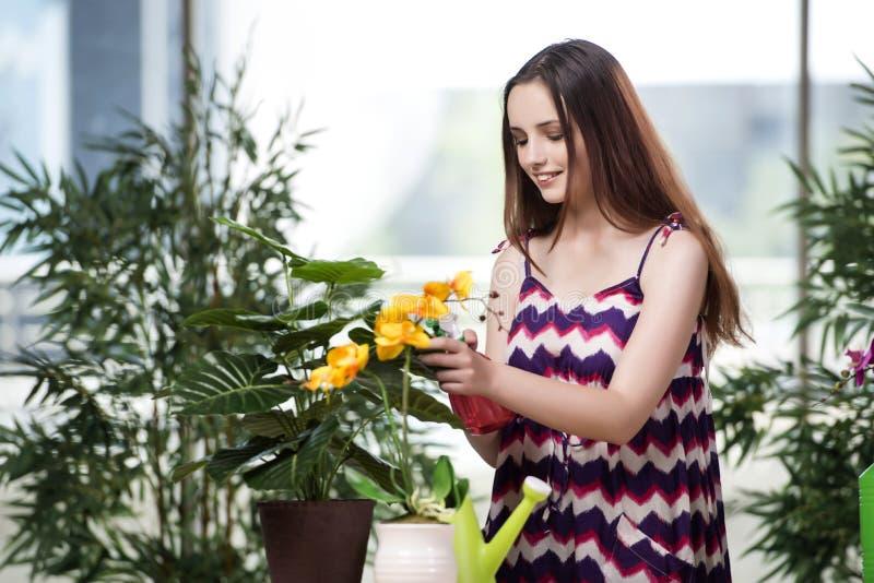 A jovem mulher que toma das plantas home fotos de stock royalty free