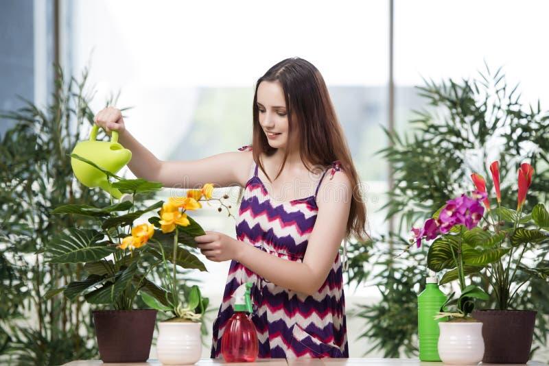 A jovem mulher que toma das plantas home fotos de stock